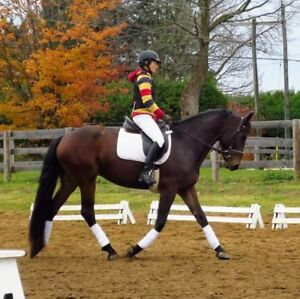 May 27 Schooling Show at The Equestrian Sport Services