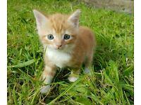 cutte kitten girl