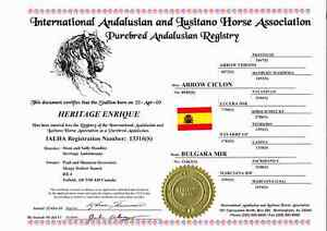3 Andalusian stallions standing at stud Strathcona County Edmonton Area image 2