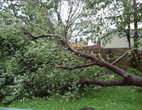 Tree removal, cutting, clearing...