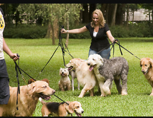 Does your dog need exercise?? I can help