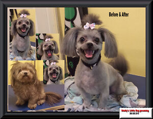 Shelly's Little Dog Grooming Regina Regina Area image 3