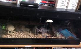 For sale Vivarium and whole new setup