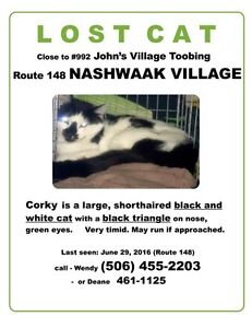 Lost cat at John's Village Toobing Nashwaak Village