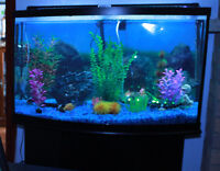 46 gallon bow shaped tank with stand/cabinet