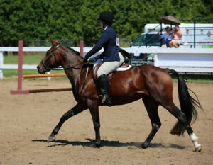 Hunter Jumper available for off property lease
