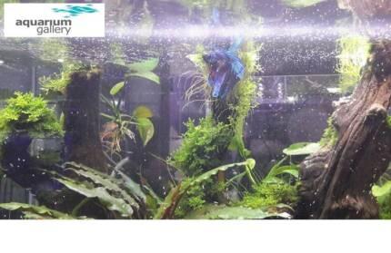 WIN a $50 Gift Voucher from Aquarium Gallery towards an aquarium