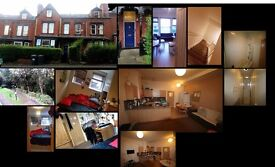 Double bedroom near Leeds city center, cool wooded area, cool flatmates