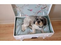 LOVELY DOG OR CAT BED VINTAGE SHABBY CHIC UPCYCLED SUITCASE