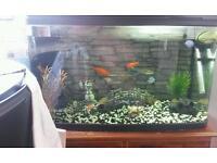 130ltr fish tank aquarium