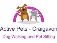I offer a flexible, reliable and friendly dog walking & pet sitting service in the Craigavon area