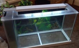 Fluvial tropical fish tank and accessories.