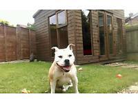 FULL DAY PET SITTING / PET SITTER/ DOG SITTER, DOG WALKING, CAT SITTING, ALTERNATIVE TO KENNELS