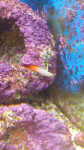 moving and seeking new home for salt water fish