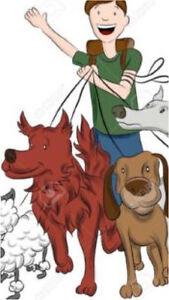 Dog walker/pet caretaker