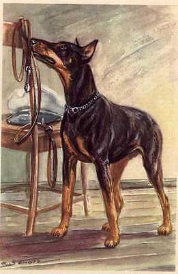 Doberman Pinscher - MATTED Dog Art Print - German / NEW U