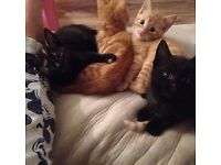 4 beautiful kittens for sale.