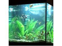 Eheim 120 litre aquarium, filter and heater, stand