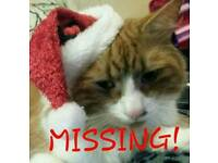 MISSING GINGER AND WHITE TOM REWARD!