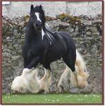 horselady01