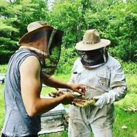 Beekeeping Assistant Position