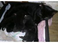 5 gorgeous kittens 🐾