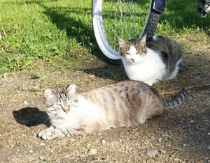 TWO NEUTERED CATS