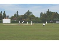 Purley CC Looking for New Cricket Players