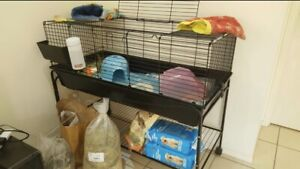 Guinea pig cage only