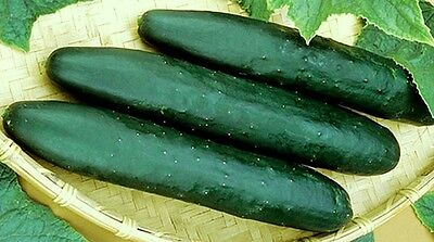 Cucumber Seeds, Straight 8, Non-Gmo Heirloom Seeds, Best for Eating Fresh,