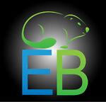 Eastern Beavers
