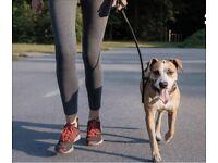 Central London Dog Walking