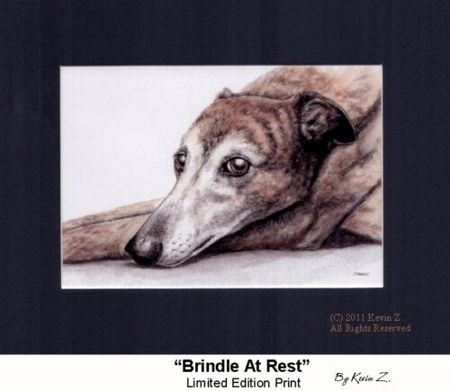 Greyhound Print Gorgeous Brindle At Rest Signed Art Artist Kevin Z Arttogo NEW