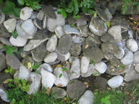 Flat River Stones for paving or decoration around pond, flower bed, etc