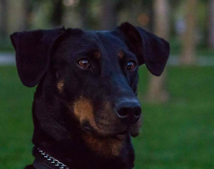 Dog walking / in home pet services