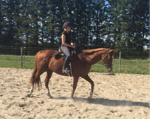 Pleasure Hunter Thoroughbred Mare