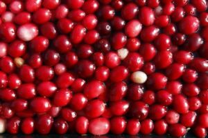Cranberry (30 seeds) fresh this season's harvest