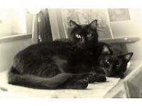 2 homeless black cats 12 and 11,need loving home A.S.A.P