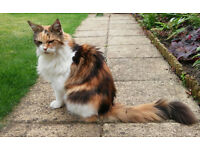 Adult Cat missing from Linslade area Bedfordshire
