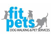 Fit Pets Dog Walking & Pet Services (Professional Walker and Sitter)