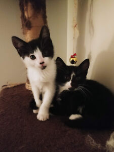 Kittens and mother for adoption