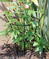 Extra Large Herbaceous Plant Support / Peonies Support - tom chambers - ebay.co.uk
