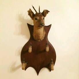 Antique Taxidermy Deer Hat & Scarf Stand