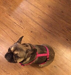 Dog items for Sale