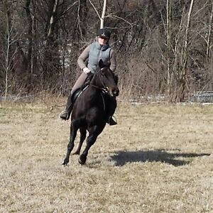 Quiet mare for trail and pleasure riding