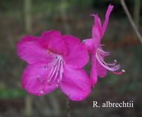 Fraser South Rhododendron Society Rhododendron Sale