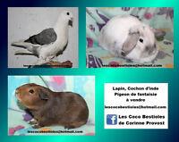 Plusieurs animaux à vendre Gatineau Ottawa / Gatineau Area Preview