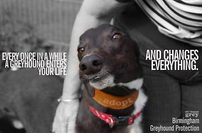 GREYHOUND FRIENDS UK