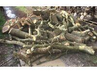 Large Quantity of Fresh Cut English Walnut Logs Timber Green Wood Nr Brighton
