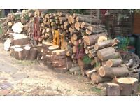 Tree logs, trunks, stump for firewood and decoration